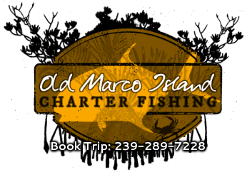 Old Marco Island Fishing Charters